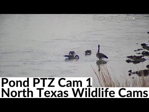 Pond Wildlife PTZ Cam Live Stream - North Texas - 1080P High Definition