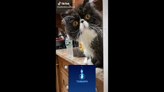 CUTE AND FUNNY THINGS THAT CATS DO COMPILATION#3 [ADORABLE AND LOVELY CATS]