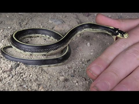 4K Killer King Snakes VS Krazy Kids: Dumped Trash Diggin. Nature, Herping, Fishing, Fun.