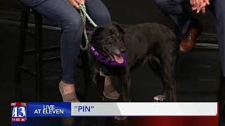 PIN - Fox 13 Best Friend from the Humane Society of Utah