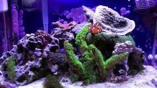 How To Setup A 10 Gallon Nano Reef Tank, Fluval Aquaclear, Pest Snails, Pineapple Sponges, Phosguard