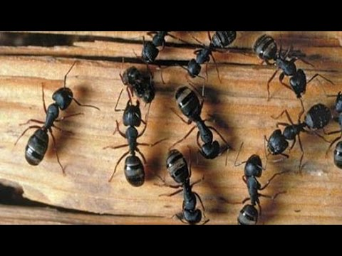 House Ants in Kitchen and Bathroom NJ 732-309-4209 - YouTube