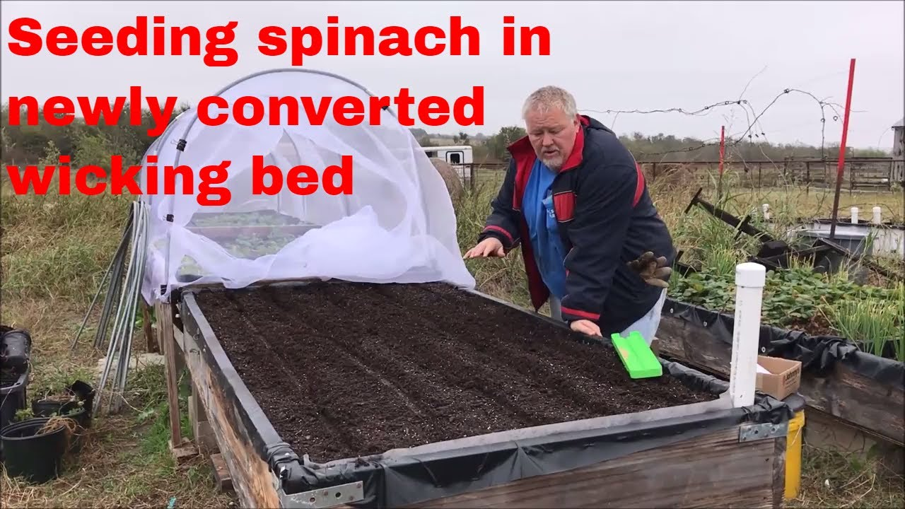 aquaponic gravel bed to