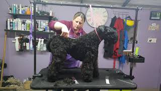 kerry blue part(1) video in 3 part competing in grooming competition Maryland USA  placed 3rd