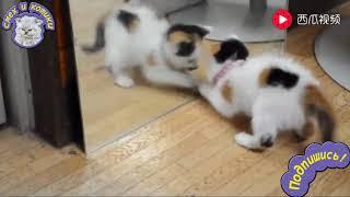 Котёнок Увидел Зеркало В Первый Раз