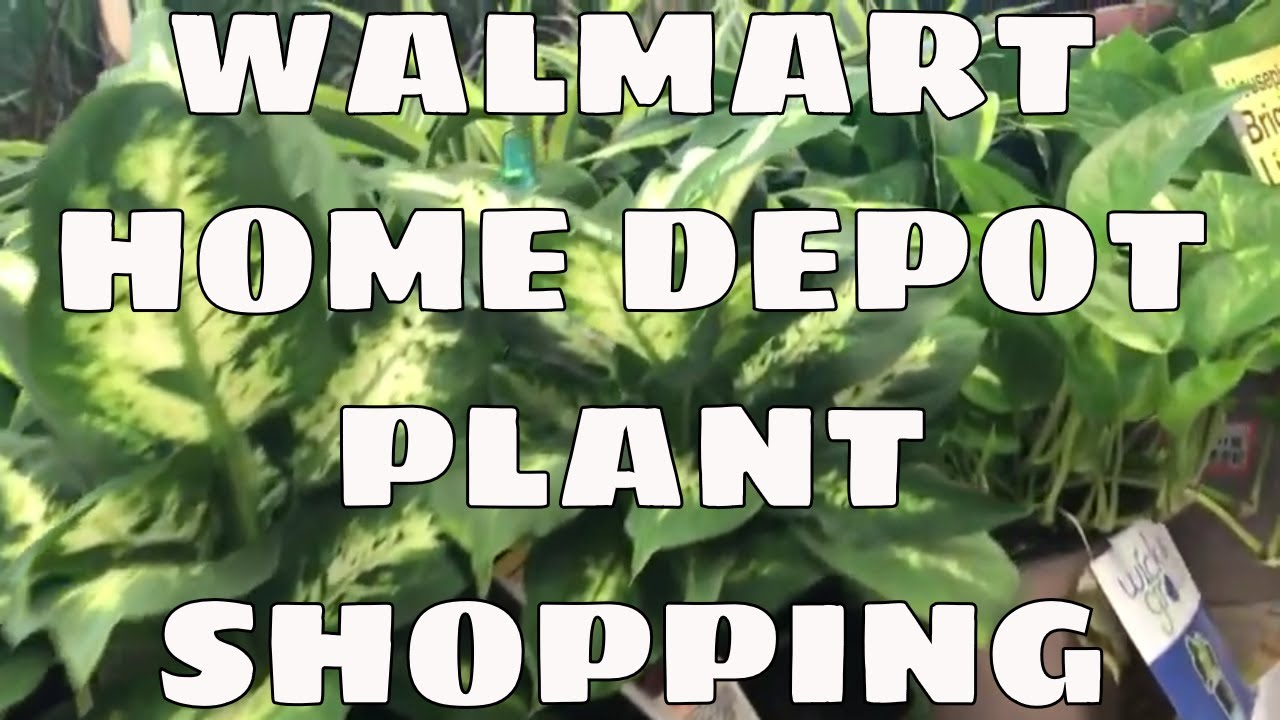Walmart Home Depot Plant Shopping Black Friday in Tampa Florida / Come on plants at sam's club, plants with white flowers, plants at kroger, plants inside home, plants at homegoods, plants that repel bugs and pests, plants at safeway, plants at menards, plants under evergreen trees, plants at publix, plants at kmart, plants at office depot, plants at michaels, plants that repel mosquitoes, plants at tj maxx, vines depot, plants at cvs, plants at ikea, plants at harris teeter, plants at disney,