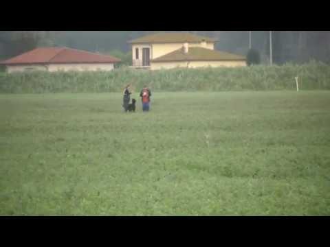 Ike-n del Caro Diavolo - ISPU VM 2013 - Sez. A