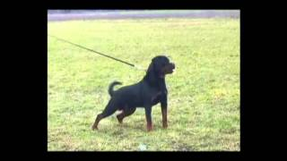 Rottweiler Kennel Presents