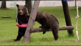 Животные мира Леса гор Медвежья пара Шанс на жизнь Сила вида Домашний уют Своё место Взросление