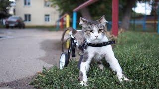 Один день из жизни кота инвалида, который очень любит жизнь.