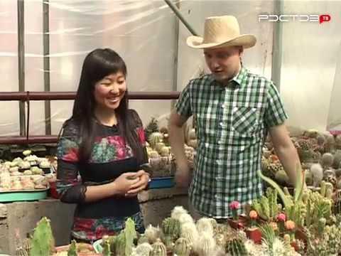 Растения из рук в руки, ростов-на-дону. Купить цветы, семена, рассаду, цветочные горшки частные и коммерческие объявления. Продать цветы.