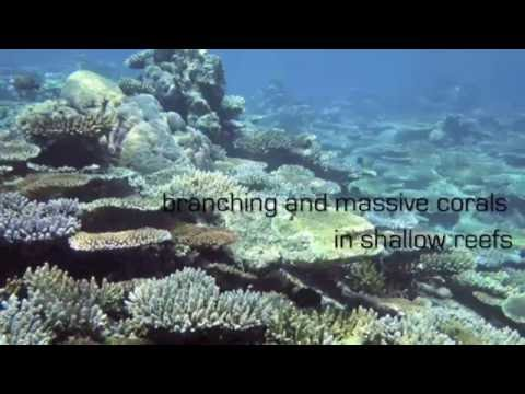 Geophysical Coral Mapping Project