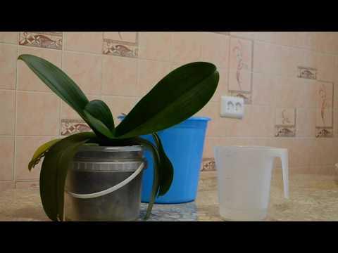 Фундазол для орхидей часть 1