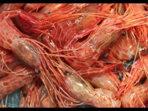 โอ้โห! ตลาดปลาโอซาก้่า กุ้งใหญ่ หอยจัมโบ้-Osaka Chuo Oroshi-uri Ichib Japan