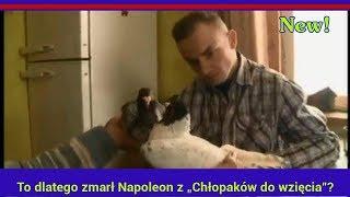 """To dlatego zmarł Napoleon z """"Chłopaków do wzięcia""""? Na jaw wychodzą nowe fakty"""