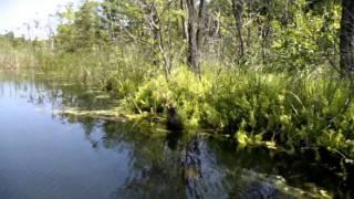 Feldberger Seenlandschaft Carwitz und der Dreetzsee