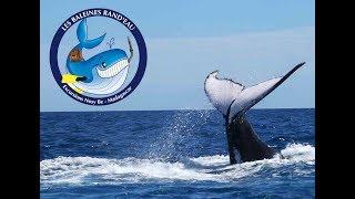 Baleines Rand'eau_Nosy Be_ Septembre 2018 !