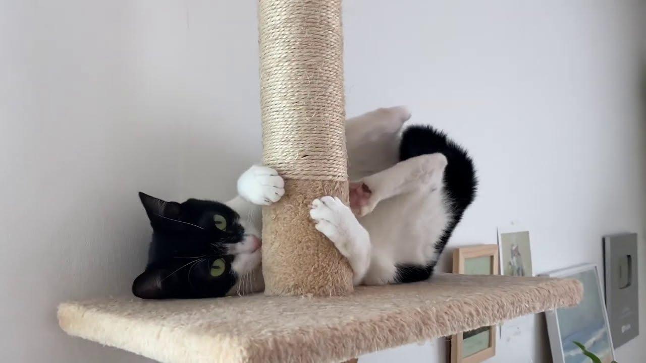 폴댄스 추는 고양이 POLE DANCING CAT..