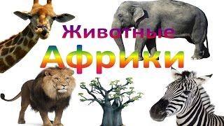 """Мультик от kidTV """"Животные Африки"""" и их звуки Развивающий мультик для детей (звуки животных)"""