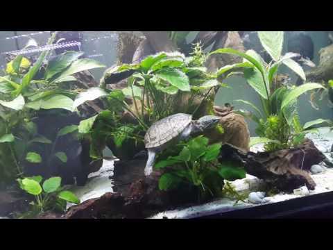 Fishroom Tour/Almost All Aquarium update