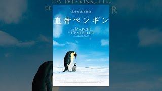南極に冬がやってくる3月、多くの生き物たちが暖かさを求めて北へ移動す...