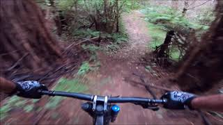 Downhill Mountain Biking, Dome Valley, Auckland NZ. Arborland and Punga run trails