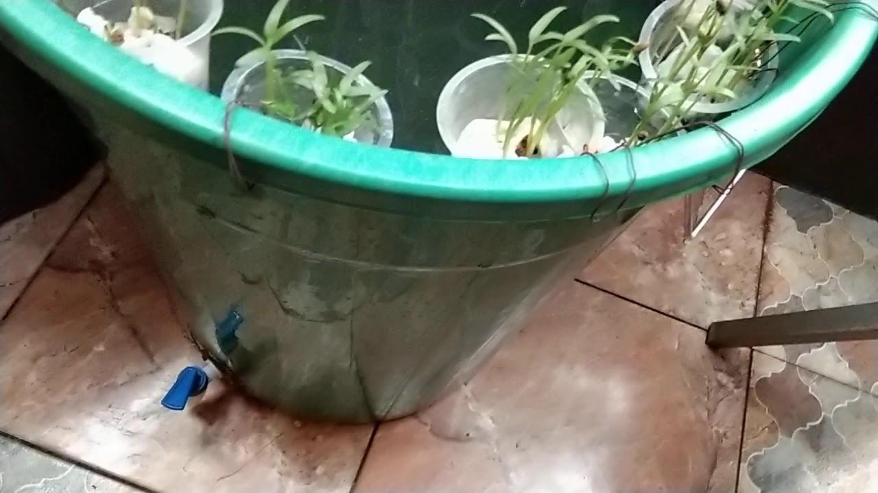 Budi daya ikan lele dan kangkung di ember itu menyenangkan ...