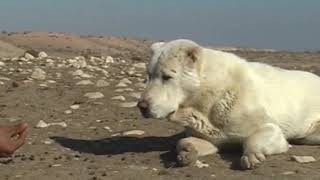 Саги дахмарда, Экспедиция Арунаса Деруса, Таджикистан 2005 часть 10