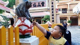 Đồ Chơi Trẻ Em Bé Pin Chăm Sóc Khỉ Con❤ PinPin TV ❤