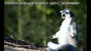Приколы анекдоты про животных