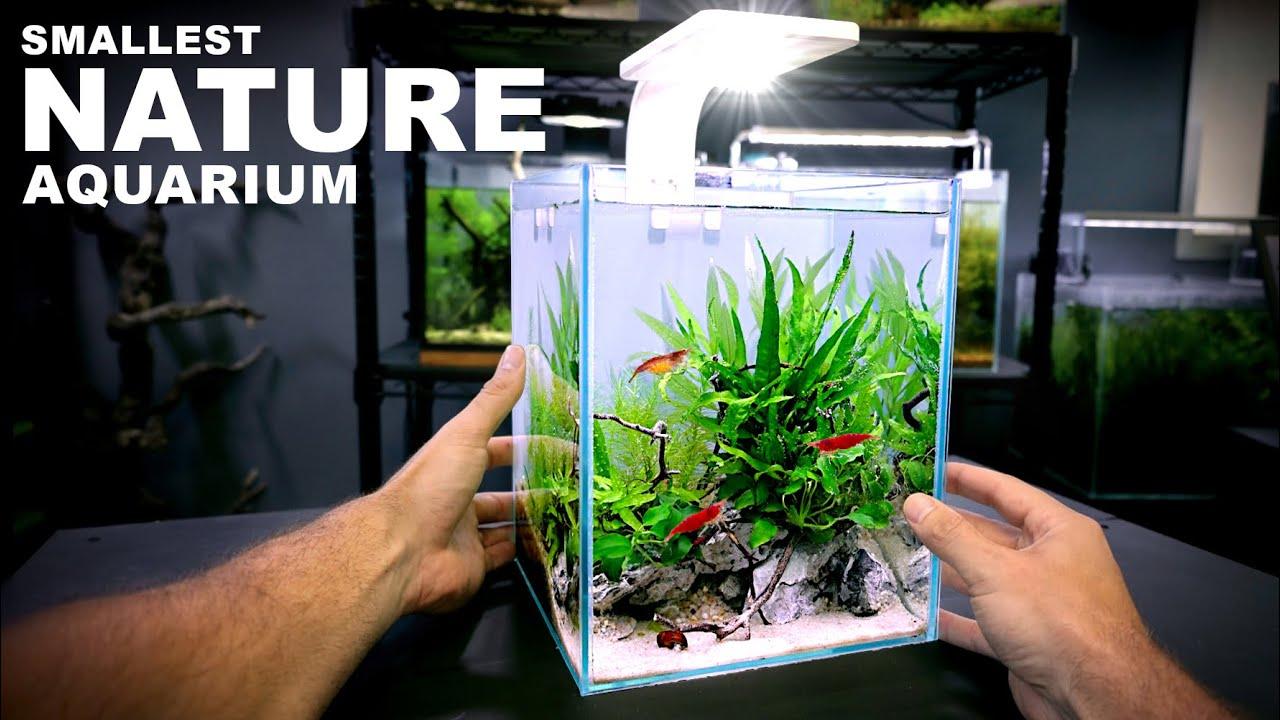 Aquascape Tutorial: TINY 2.6 gal NATURE Aquarium (How To: Step By Step Nano Tank Guide)