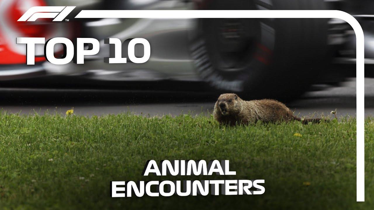 Top 10 Animal Encounters in F1 - скачать с YouTube бесплатно