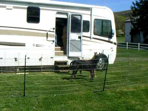 Danes Exiting Rv Into Their Portable Pet Yard Youtube