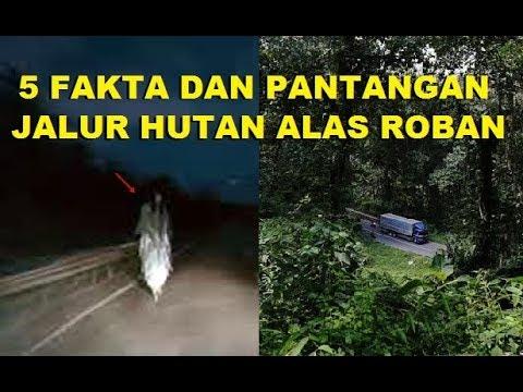 Download MENGUNGKAP FAKTA DAN PANTANGAN DI HUTAN ALAS ROBAN