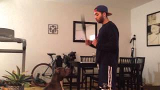 Dog Training And Impulse Control - Pitbull - Dream Come True K9