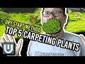 Best Aquarium Carpet Plants for The Dry Start Method