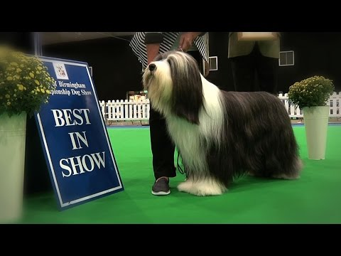 City of Birmingham Dog Show 2016 - Best in Show