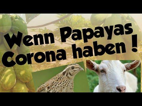 Corona: Früchte, Ziegen und Vögel positiv!