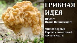 Грибная идея  Проект Ивана Вишневского  Фильм 1 й  Строчок гигантский  лесные мозги