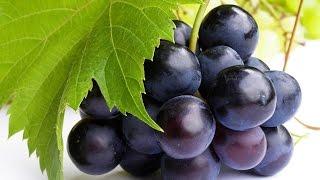 видео Польза виноградного сока