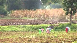 Farmers ploughing with bullocks and women de-weeding in Karnataka