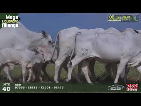 LOTE 040