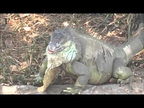 Bengaluru's oppressive heat: Water sprinklers help animals in Bannerghatta zoo cool off