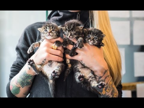 LIVE: Let's name the new kittens!