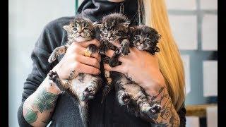 LIVE: Let's name the new kittens! thumbnail