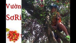 hái trái cây tại vườn và cái kết