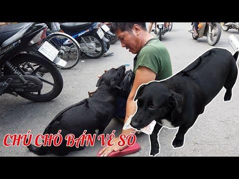 Cảm động với chú chó bán vé số giúp chủ bị khuyết tật mưu sinh hàng ngày