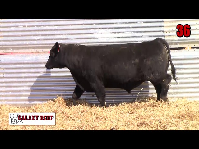 Galaxy Beef Lot 36