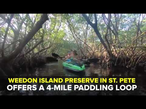 Kayak through mangrove tunnels in St. Pete | Taste and See Tampa Bay