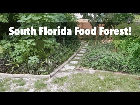 A 6-Year-Old South Florida Food Forest in Fort Lauderdale (Tour 2017)